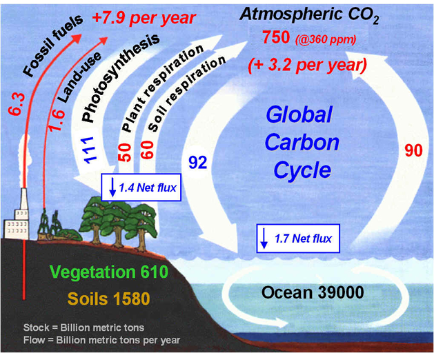 Understanding The Global Carbon Cycle Manual Guide