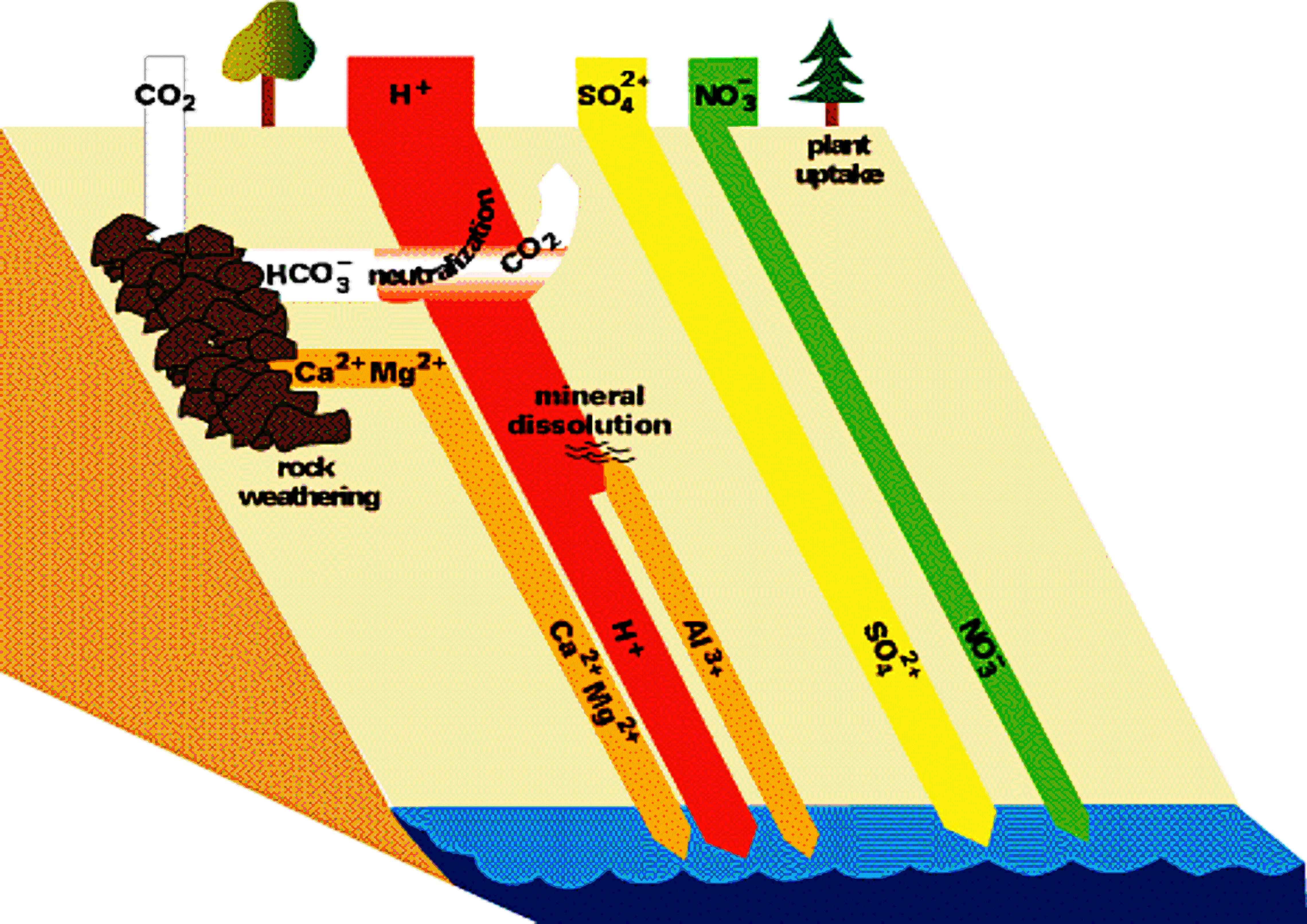 pollution, acid rain, and systems thinking Acid Rain Trees
