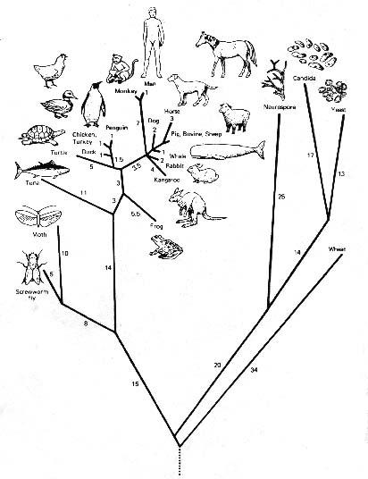 Evidence For Evolution Worksheet | Free Printable Math Worksheets ...